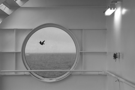 Petra Pocanic_Ferryboat_lightbox